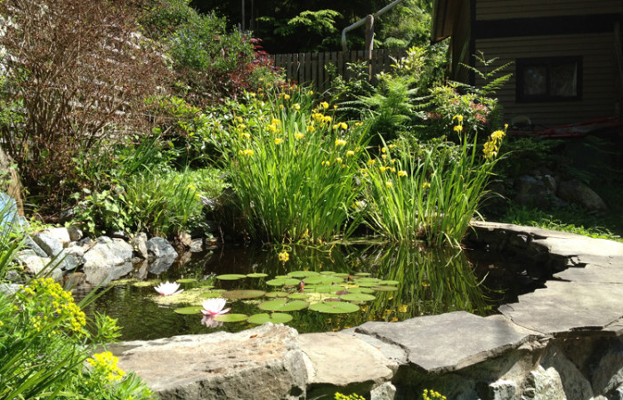 pond_lilies
