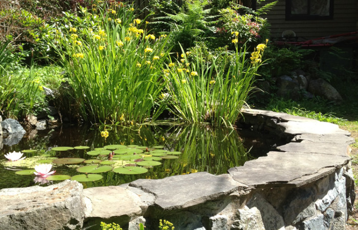 a raised stone pond with lily pads and yellow flowers