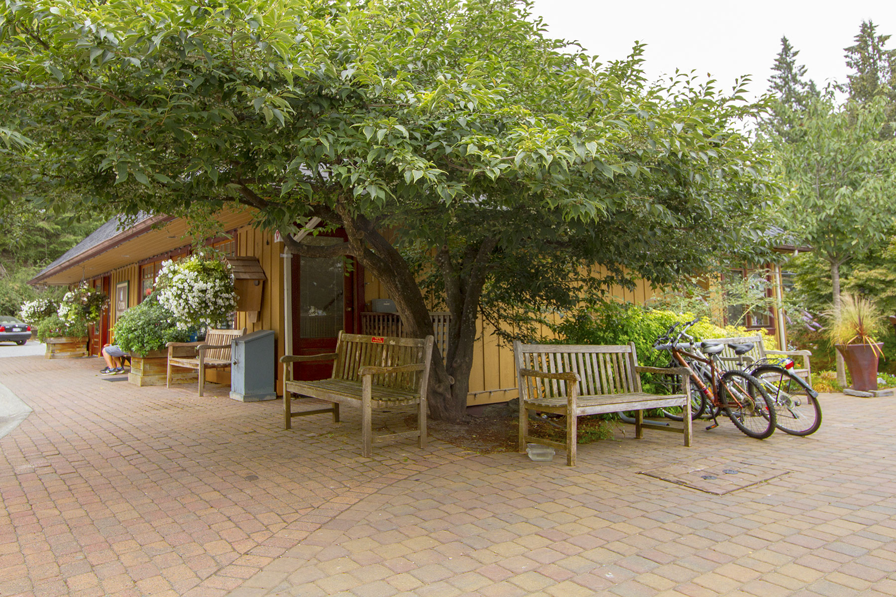 Village Square, showing a wide patio with rounded oblong pavers and a tree branching out over two wooden benches
